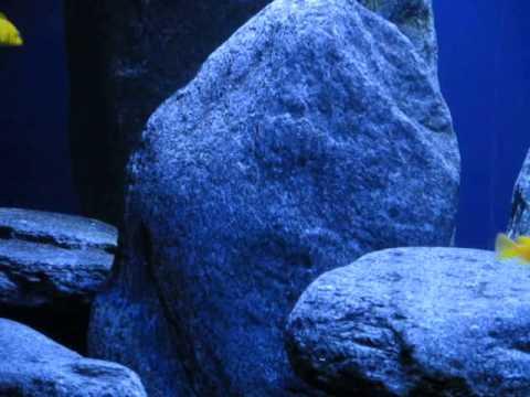 Zierfische: Malawi Buntbarsche - Doku Einrichtung Malawi Aquarium
