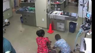 Troje weterynarzy próbuje przytrzymać 60 kg psa do zabiegu! Widząc finał tej akcji płakałam ze śmiechu!