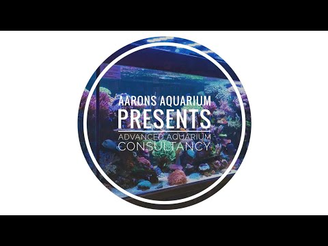 Aarons Aquarium Presents Advanced Aquarium Consultancy_Akvárium