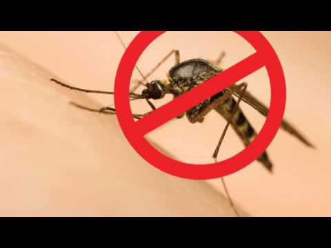 Vídeo: São Gonçalo Unido Contra o Aedes Aegypit 1