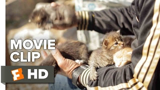 Nonton Kedi Movie CLIP - Abandoned Kittens (2017) - Documentary Film Subtitle Indonesia Streaming Movie Download