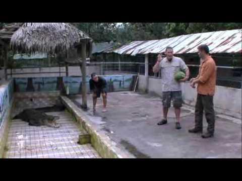 Cocodrilo destroza sandias