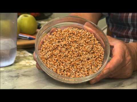 Как прорастить пшеницу  и молочко из проростков