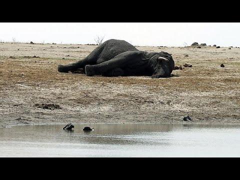 Ζιμπάμπουε: Άγρια ζώα «στο σφυρί»