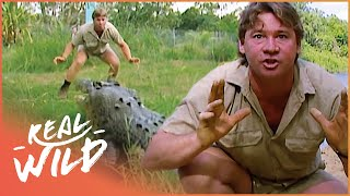 Nonton Crocs Down Under [Steve Irwin Documentary] | Wild Things Film Subtitle Indonesia Streaming Movie Download