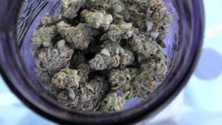 HighTimes Cannabis Cup Weed Carnival 2016 by Urban Grower