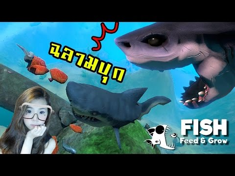 พี่ฉลามขาโหด จอมวายร้ายแห่งท้องทะเล | feed and grow [zbing z.]