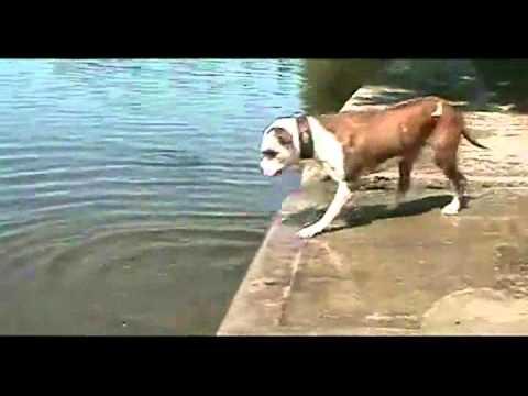 Klassiker: En stackars bulldog med sin sten