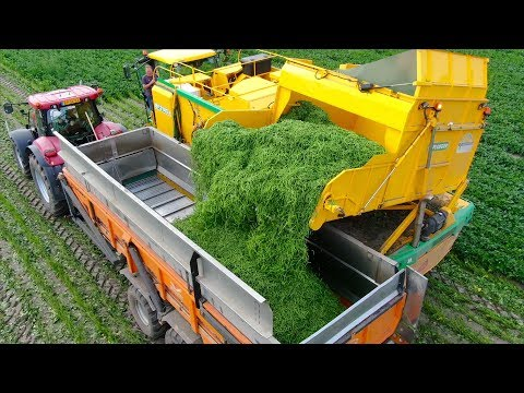 Picking Green Beans | New Ploeger BP2140e Bean Picker  | Laarakker Well | Harvesting Haricot Verts