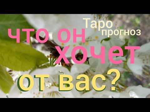 Таро прогноз ЧТО ОН ХОЧЕТ ОТ ВАШИХ ОТНОШЕНИЙ ОТ ВАС ?Онлайн гадание на картах Таро аsмr видео Нуggе - DomaVideo.Ru