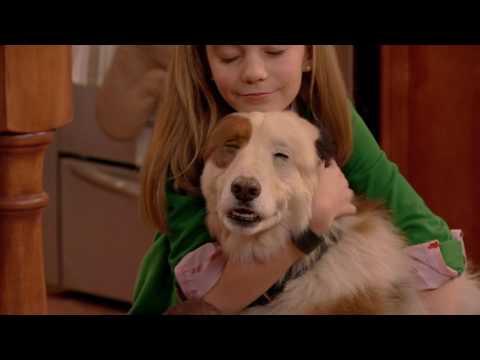 Собака точка ком - Все серии подряд (Сезон 1 Серии 1, 2, 3) l Сериалы Disney (видео)