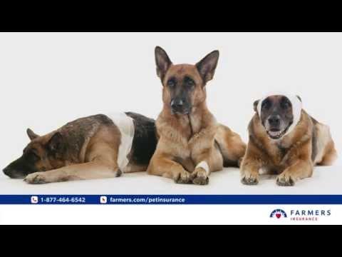 Farmers Pet Insurance - Street Smarts