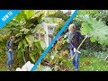 Download Lagu How to protect Banana and Gunnera plants in winter Mp3 Free