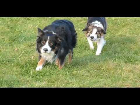 the collie walk