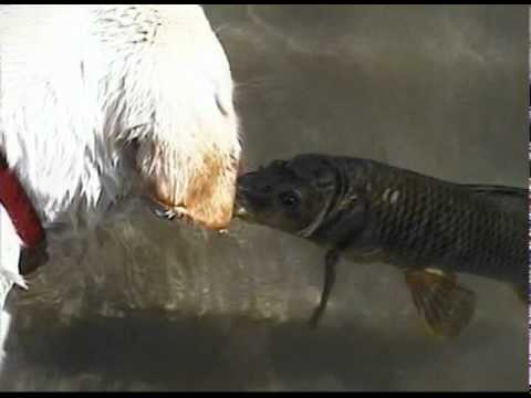 Eternal Friends – Dog And Fish?