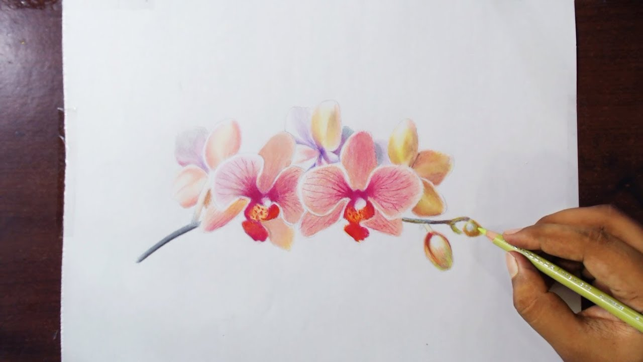 Orchids Flower Drawing Tutorial by fadil
