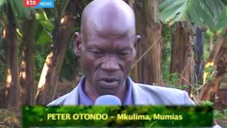 MAZINGIRA: Bio Intensive Farming in Mumias