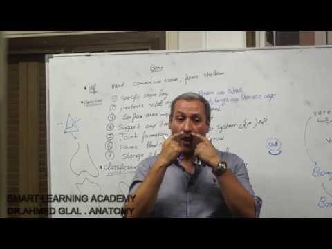 dr ahmed glal  introduction to anatomy  first year medical student