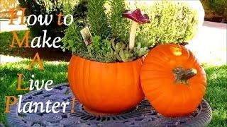 How To Make A Live Garden Pumpkin Centerpiece