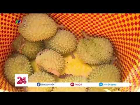 Mẹo phân biệt sầu riêng chín cây với sầu riêng nhúng thuốc @ vcloz.com