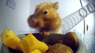 Download Youtube: Inside a hamster's cheeks | Pets - Wild at Heart: Episode 1 Preview | BBC One
