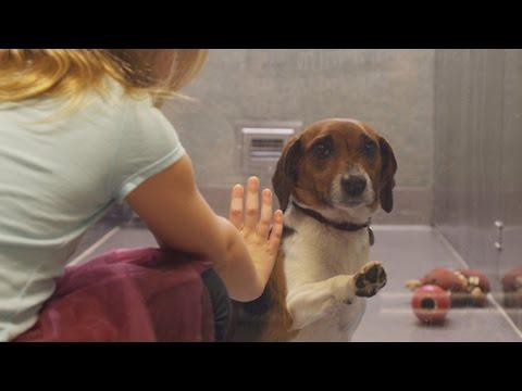 video emozionante che vi mostrerà perchè adottare i cani dai canili