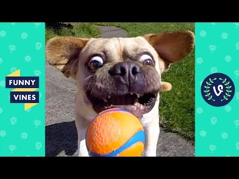 TRY NOT TO LAUGH - FUNNY ANIMALS Compilation | Dogs & Cats | Funny Vines June 2018 (видео)