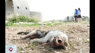 Wasteland - dog rescue in the outskirts of Athens by The Orphan Pet