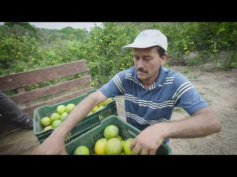 Caso de éxito de proveedor Walmart - Costa Rica: Javier Zeledón