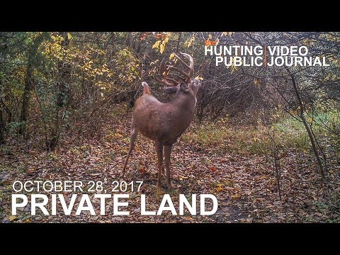 Private Land: October 28 - Big Mature Buck at 10 Yards | The Hunting Public