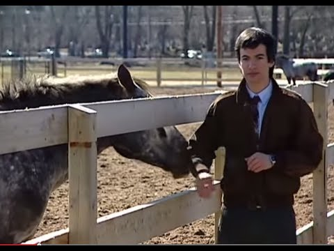 Collection - Early Nathan Fielder Comedy skits