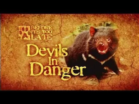 Tasmanian Devil Committed to Linux Kernel
