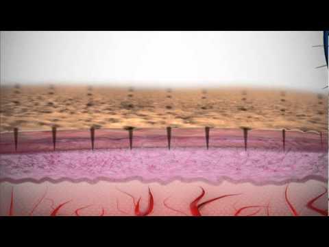 Rodan and Fields Dermatologists Award Winning ANTI-AGING Regimen.