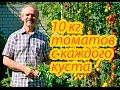 Видео - Помидоры. 10 кг томатов с каждого куста. Как этого достичь. Реальный опыт.