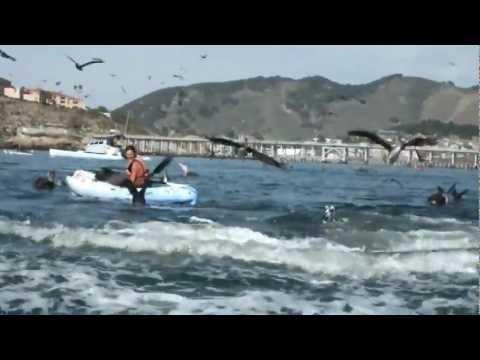 Ballena le da tremendo susto a una mujer en kayak