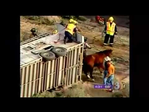 Dangerous Trailers.org Presents Horse Trailer Came Loose Two Credit AZ Family