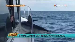Download Video Hiu Mako Ini Melompat dan Tersangkut di Kapal MP3 3GP MP4