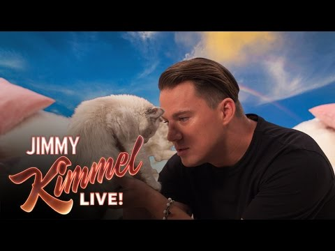 If You Hate Kittens or Channing Tatum, You Should Watch This Video
