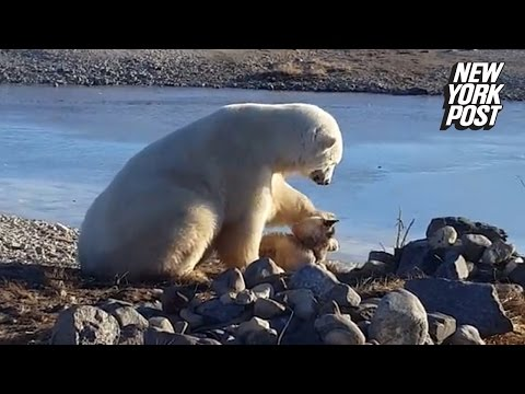 Why Is The Polar Bear Petting The Dog