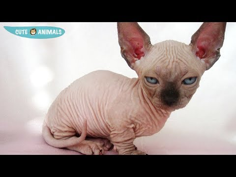 Funny cat videos - Cutest Cats and Kittens Compilation 2019  Best Cute Cat Videos Ever