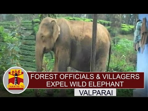 Forest-officials-Villagers-expel-wild-elephant-near-Valparai-Thanthi-TV