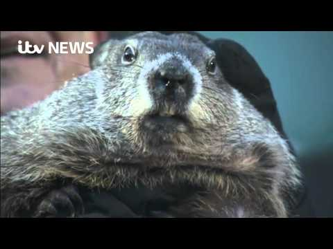 How Does Punxsutawney Phil Do It?