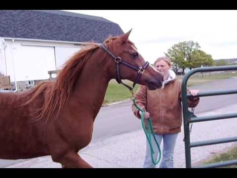 Spring at the MSU Horse Farm