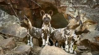 África do Sul selvagem: Animais de Kalahari