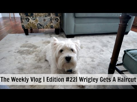 The Weekly Vlog 2016 | Edition #22 | Wrigley Gets A Haircut