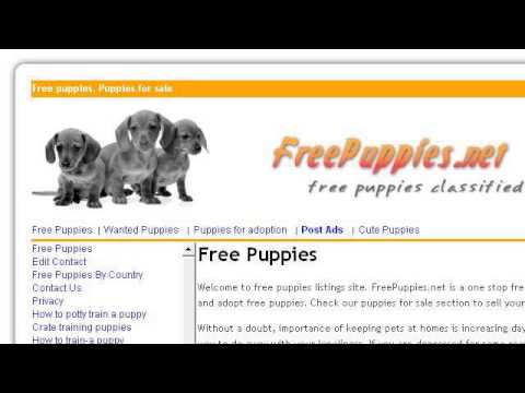 How-To Get Free Dogs For Adoption