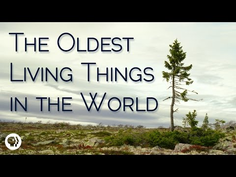 an overview of living things on earth Overview renaissance  the evolutionary history of life on earth traces the processes by which both living organisms and fossil organisms evolved since life.