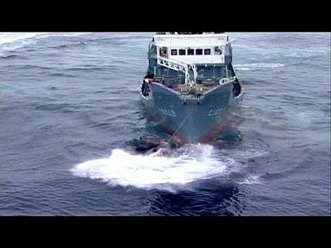 Hága előtt Japán – a bálnák élete a tét