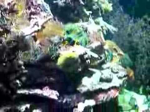 Cool fish – Riverhead Aquarium