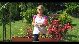 Egynyári növények teszt ültetése balkonládába 2.